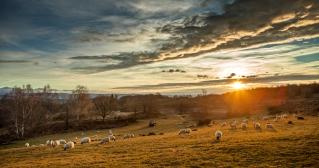L'agneau des Bruyères 5